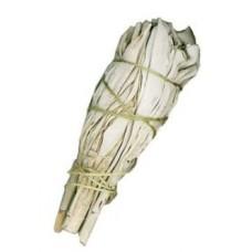 White Sage. 10cm