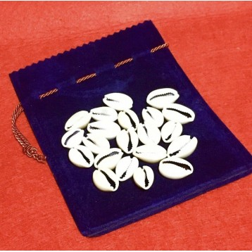 Diloggun Cowrie Divination Shell + gift bag